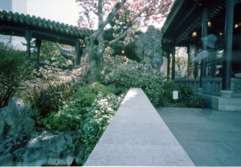 Portland's Chinese Gardens