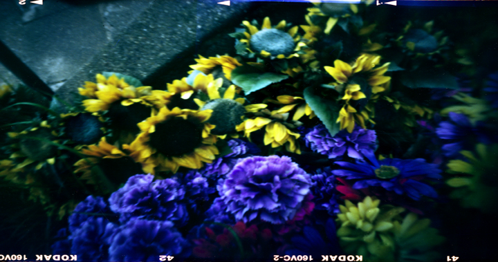 Zeis Plastic Flowers